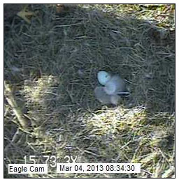 Unhatched 3rd Egg on Blackwater Eagle Cam